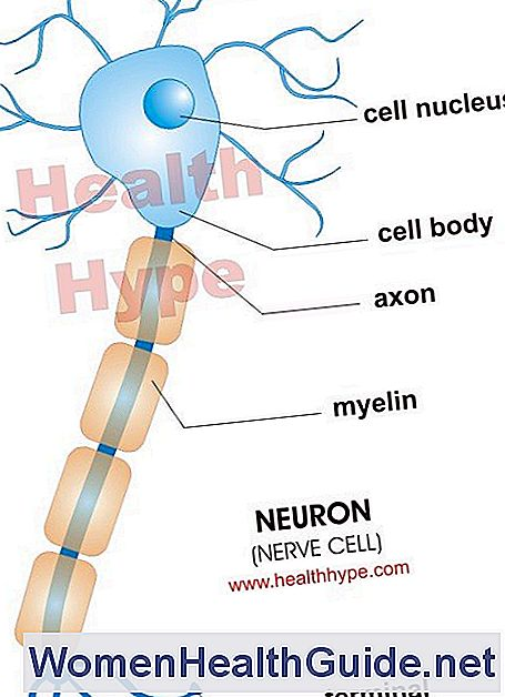 Neurone (cellula nervosa)