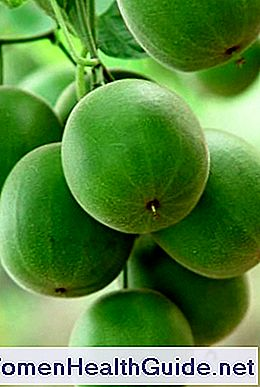 Monk Fruit: The New Sugar Alternative