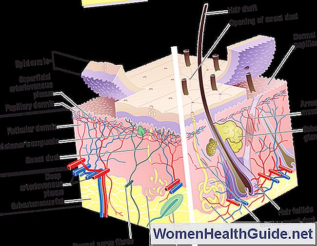 Anatomía de la piel humana - Estructura de las capas de epidermis y ...