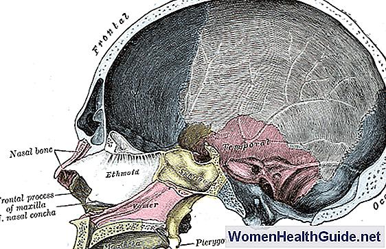 Sinus Cavities (Nasennebenhöhlen) Lage, Anatomie, Bilder ...